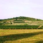 Plantacje winogron - okolice Tokaju